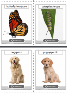 Growing and Changing activity picture cards